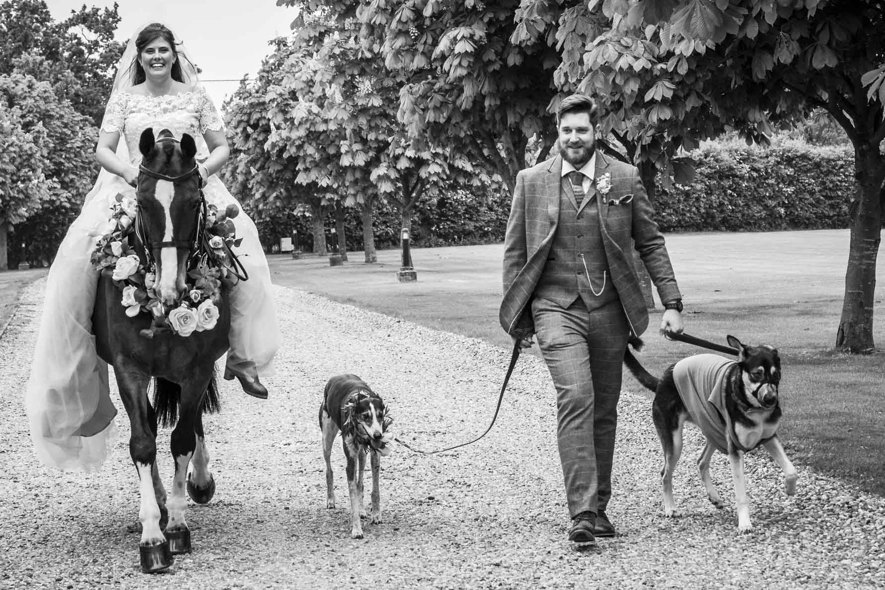 A bride sits atop her horse while her groom walks alongside with two dogs on a lead